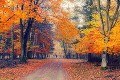 Stationnement brumeux d'automne image libre de droits