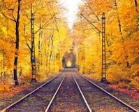 Stationnement brumeux d'automne photo stock