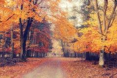 Stationnement brumeux d'automne photos stock