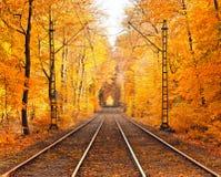 Stationnement brumeux d'automne images stock