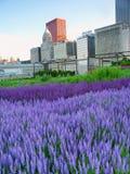 Stationnement Chicago de millénaire de jardin de Murie Photos libres de droits