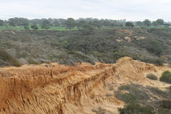 Stationnement d'état de pins de Torrey image libre de droits