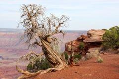 Stationnement d'état mort de point de cheval mort d'arbre Images libres de droits