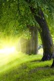Stationnement d'arbre photos stock