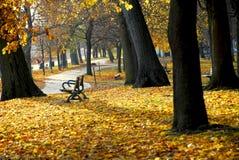 Stationnement d'automne photos stock