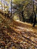 Stationnement d'automne Photo libre de droits