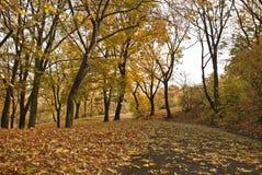Stationnement d'automne Image stock