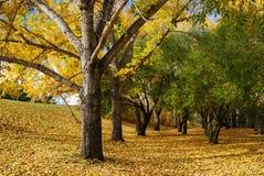 Stationnement d'automne Photographie stock libre de droits