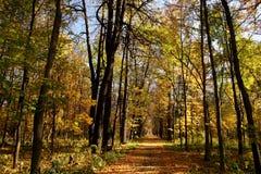 Stationnement d'automne. Photos libres de droits