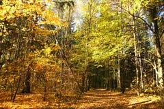 Stationnement d'automne. images libres de droits