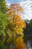 Stationnement d'automne avec l'étang Photographie stock