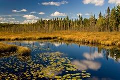 stationnement d'automne de l'algonquin Image libre de droits
