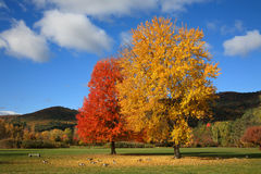 Stationnement de champ de bataille, lac George, New York Images stock