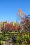 Stationnement de cuvette de sentier piéton par automne Photos stock