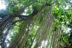 Stationnement de forêt de singe Image stock
