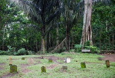 Stationnement de forêt de singe Photo stock