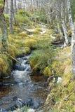 stationnement de glenmore de forêt Photo libre de droits