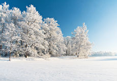 Stationnement de l'hiver dans la neige Photos stock