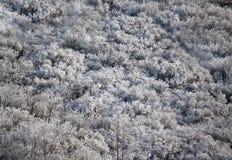 Stationnement de l'hiver dans la neige Photo libre de droits