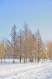 Stationnement de l'hiver dans la neige Photographie stock libre de droits
