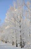 Stationnement de l'hiver dans la neige Image stock