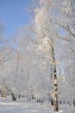 Stationnement de l'hiver dans la neige Image libre de droits