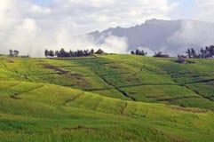 Stationnement de montagne de Simien Images libres de droits