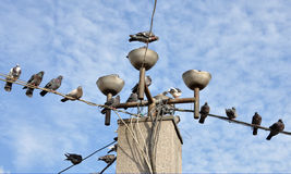 Stationnement de pigeon Photo stock