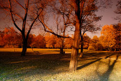 Stationnement de ville à la lumière du soleil d'automne Images libres de droits