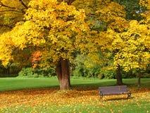 Stationnement de ville en automne Photographie stock libre de droits