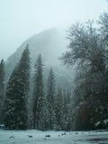 Stationnement de Yosemite dans la truie. Images stock