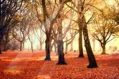 Stationnement en automne images libres de droits