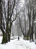 Stationnement en hiver Photo stock