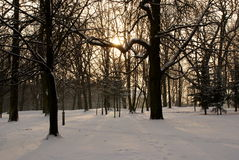 Stationnement en hiver. Images stock