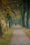 Stationnement en jour brumeux d'automne Images stock