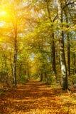 Stationnement ensoleillé d'automne Photos libres de droits