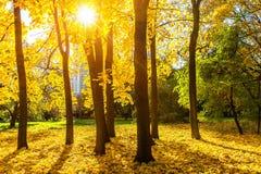Stationnement ensoleillé d'automne Images libres de droits