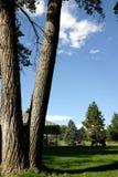 Stationnement et l'arbre Image libre de droits