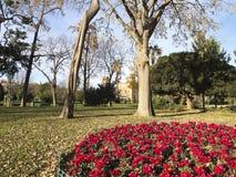 Stationnement faisant le coin fleuri de Ciutadella Photos stock