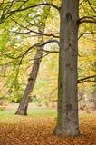 Stationnement feuillu en automne Photos stock