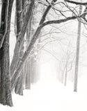Stationnement gentil en hiver Photos libres de droits