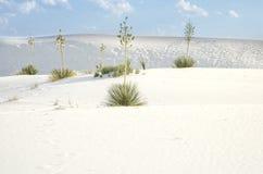 Stationnement national blanc de dunes de sable Photographie stock