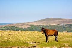 Stationnement national de Dartmoor Image stock