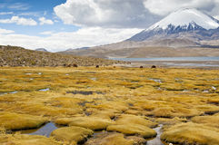 Stationnement national de Lauca Photo libre de droits