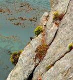 Stationnement national de Lobos de point Image libre de droits