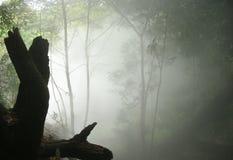 Stationnement national de Rincon de la Vieja, Costa Rica Photographie stock libre de droits