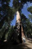 Stationnement national de séquoia images stock
