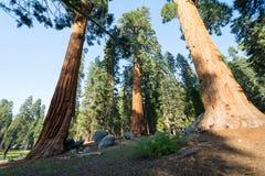 Stationnement national de séquoia, la Californie, Etats-Unis Photographie stock libre de droits