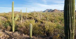 Stationnement national de Saguaro Photos libres de droits