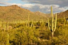 Stationnement national de Saguaro Photo libre de droits